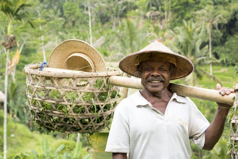 Bonde på arbete i risfält, Bali royaltyfri foto