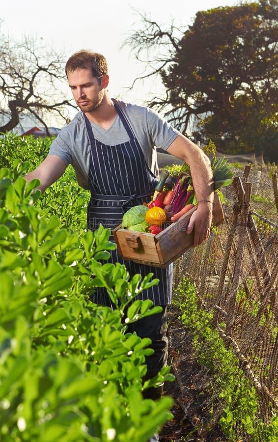 Bonde på lokal hållbar organisk lantgård royaltyfri fotografi