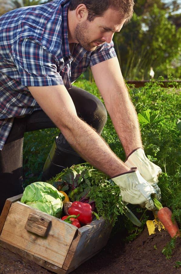 Bonde på lokal hållbar organisk lantgård arkivfoton