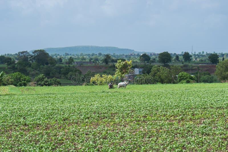 Bonde Ploughing sojabönafältet royaltyfri foto
