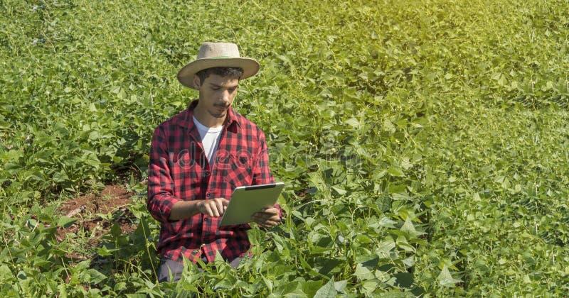 Bonde som använder den digitala minnestavladatoren i kultiverat sojabönafält arkivfoto