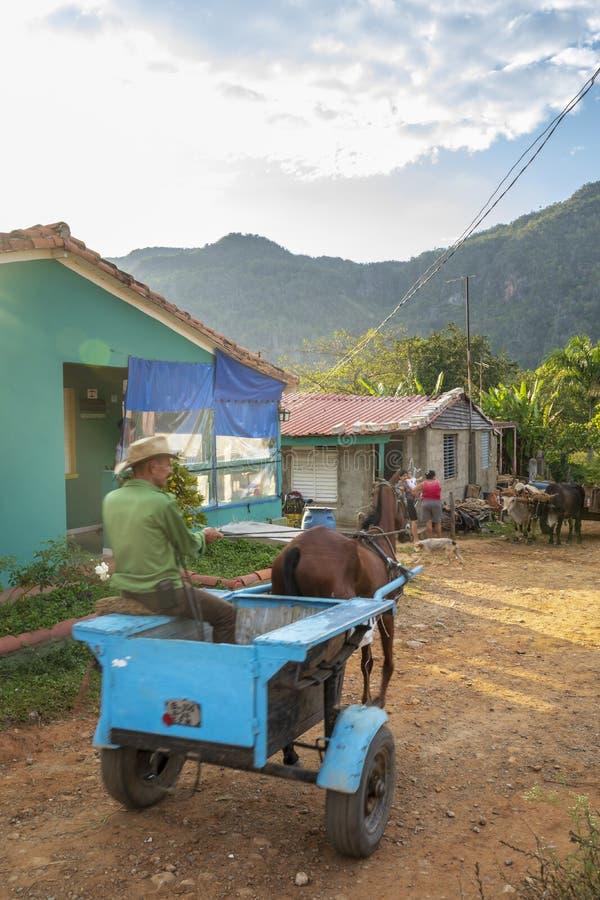 Bonde som använder hästtriumfvagnen, UNESCO, Vinales, Pinar del Rio Province, Kuba, västra Indies som är karibiska, Central Ameri fotografering för bildbyråer
