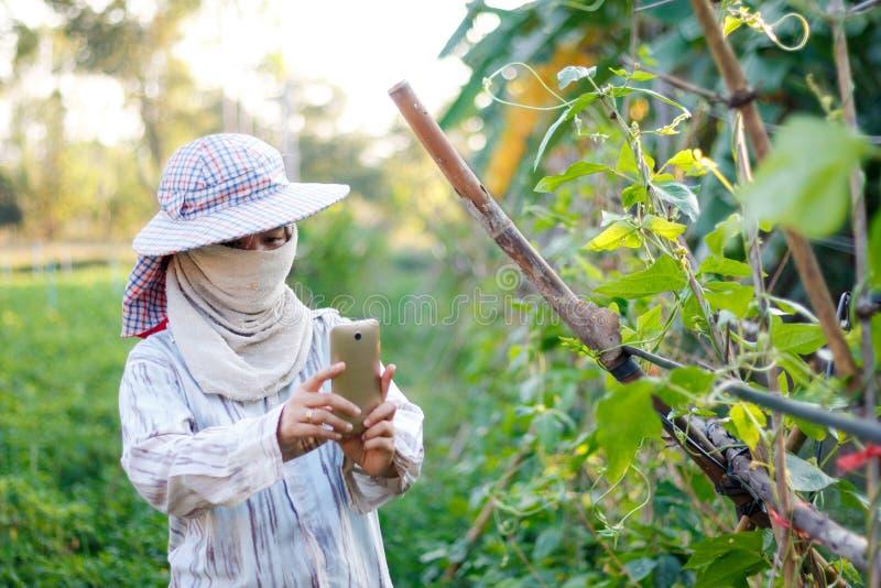 Bonde som använder mobiltelefonsmartphonen till att skjuta fotoet av växten royaltyfri foto