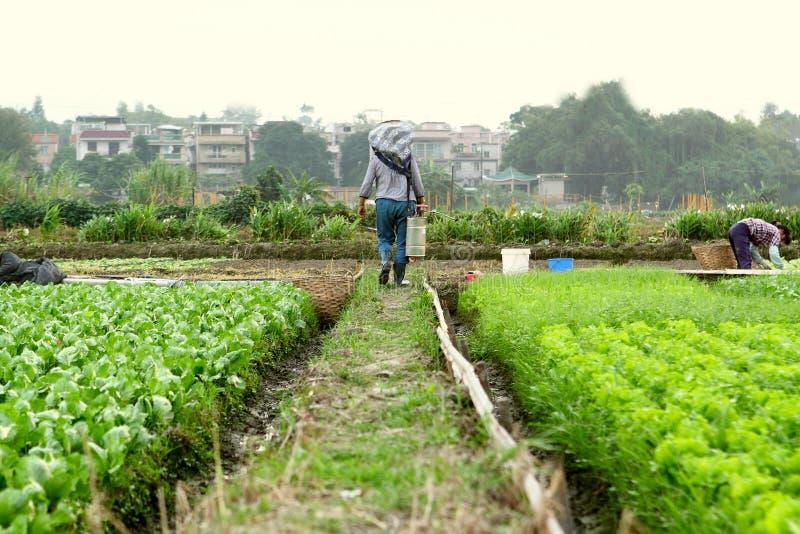 Bonde som arbetar i odlingsmark royaltyfri foto