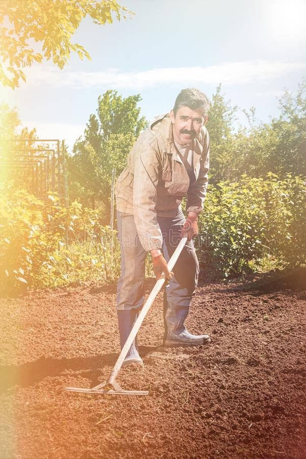 Bonde som arbetar i trädgården med hjälpen av en kratta som jämnar pl arkivbilder