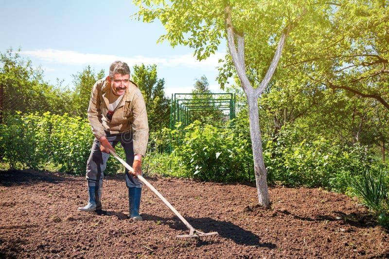 Bonde som arbetar i trädgården med hjälpen av en kratta som jämnar pl royaltyfri fotografi