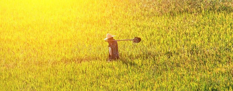 Bonde som går till och med ett guld- vetefält arkivfoto
