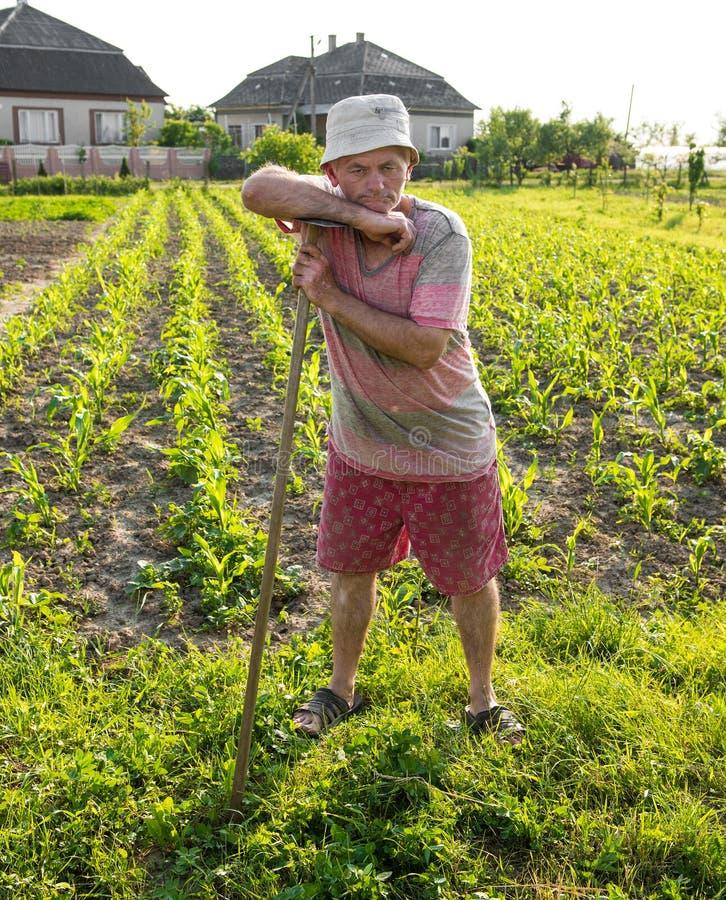Bonde som hackar grönsakträdgården royaltyfri fotografi