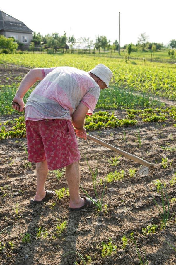 Bonde som hackar grönsakträdgården arkivbild