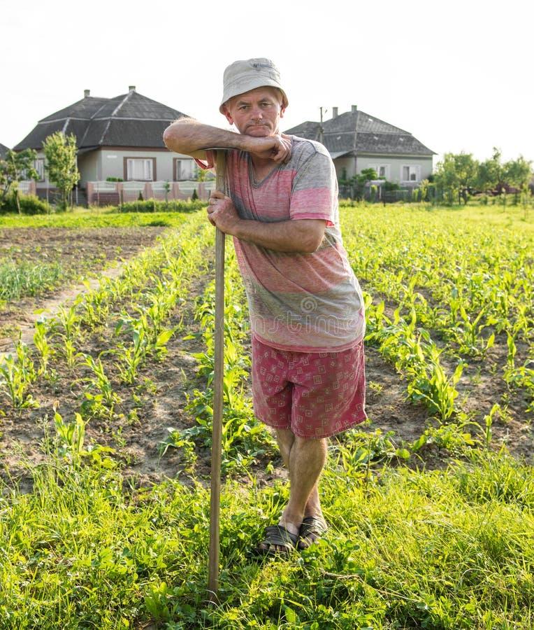 Bonde som hackar grönsakträdgården royaltyfri bild