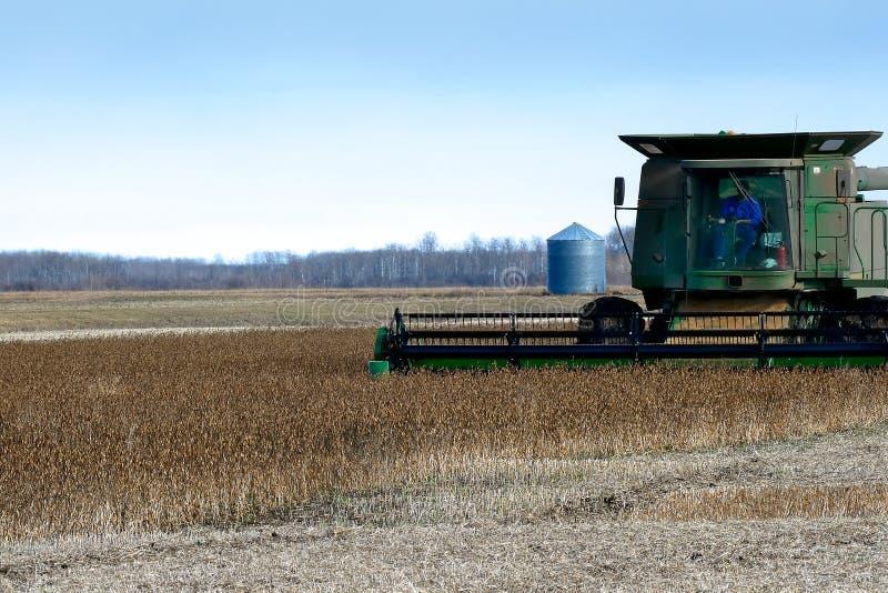 Bonde som kör sammanslutningen att skörda fältet av sojabönor för mat och andra produkter arkivfoto