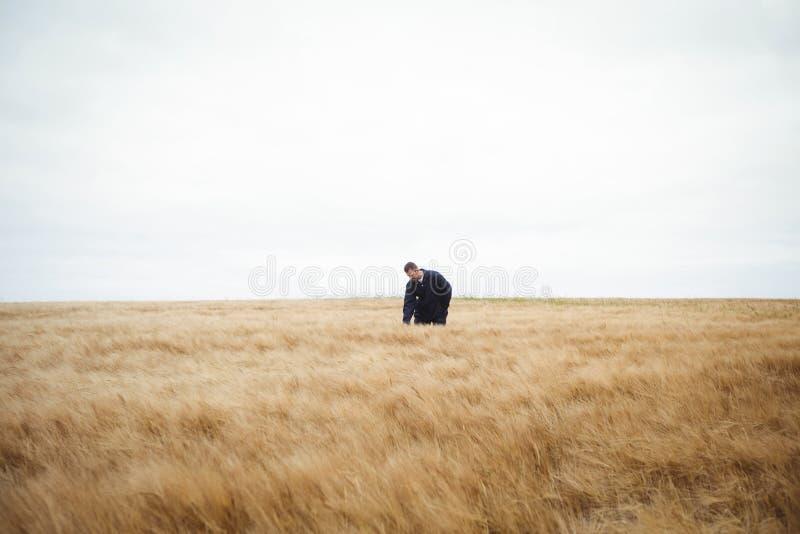Download Bonde Som Kontrollerar Hans Skördar I Fältet Arkivfoto - Bild av fält, oklarhet: 78727982