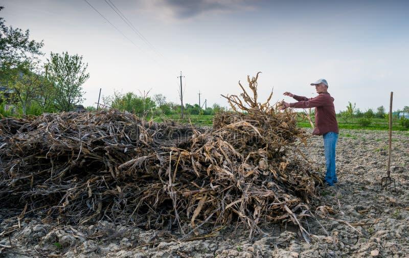 Bonde som krattar torkade filialer Fjädra den tid… ron lämnar, naturlig bakgrund arkivfoto