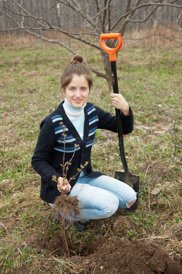 Bonde som planterar groddbuskaget royaltyfri bild