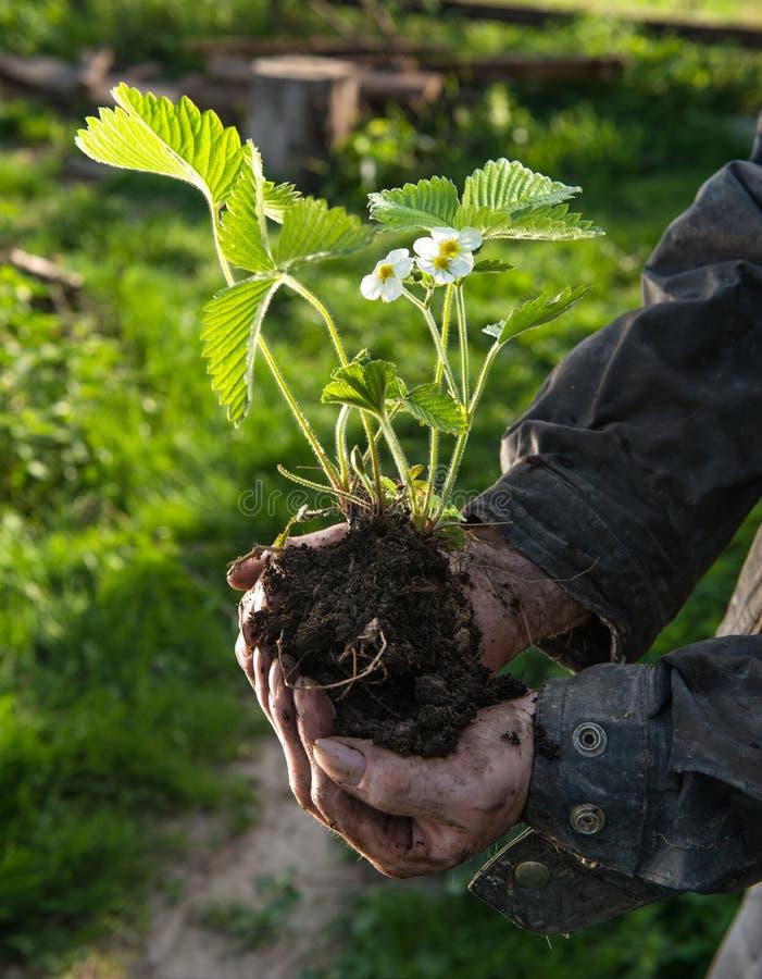 Bonde som rymmer en grön ung växt fotografering för bildbyråer