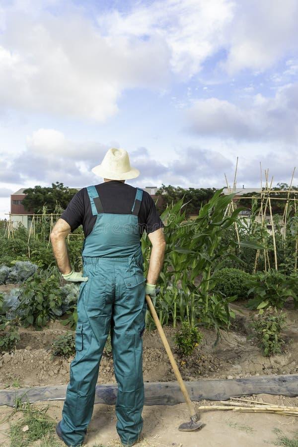 Bonde som ser hans stads- grönsakträdgård arkivbild