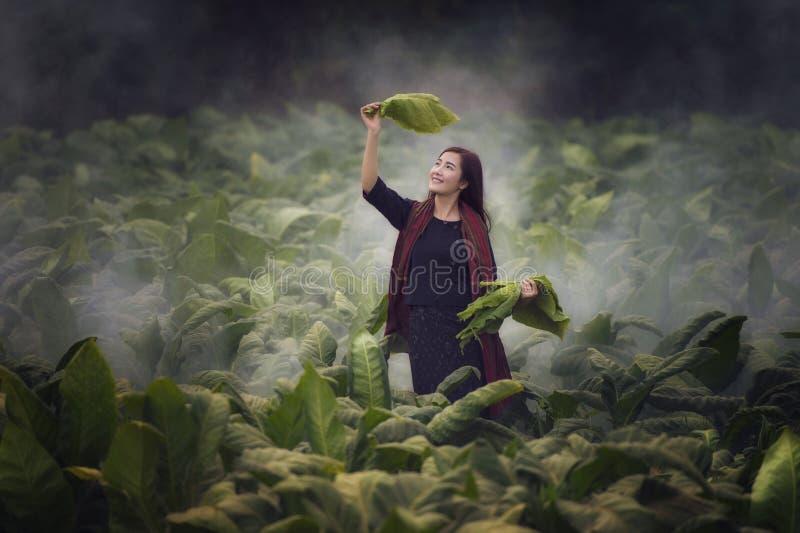 Bonde Woman arkivfoton