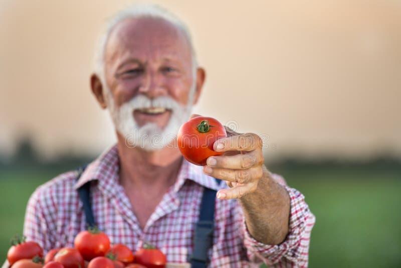 Bondeinnehavspjällåda med tomaten royaltyfria foton