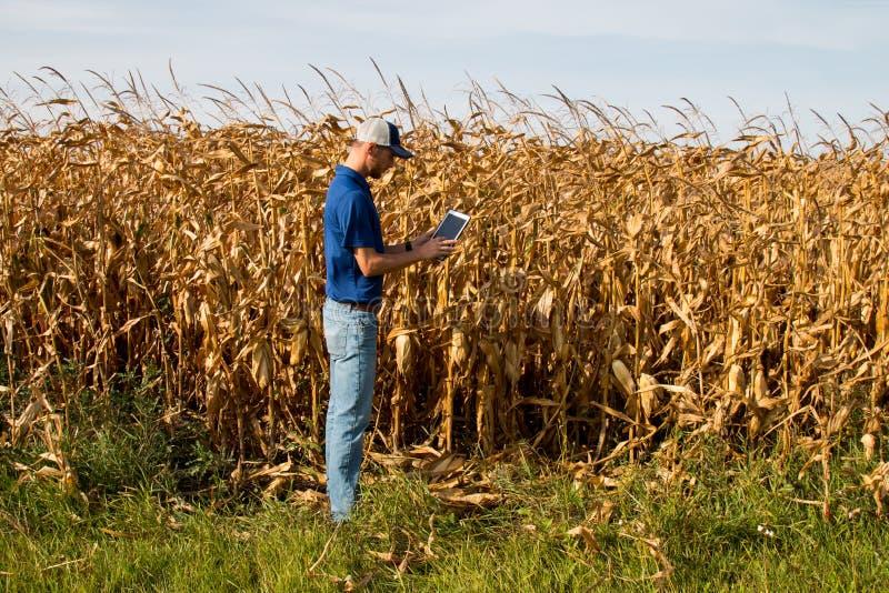 BondeInspecting Corn fält arkivfoto