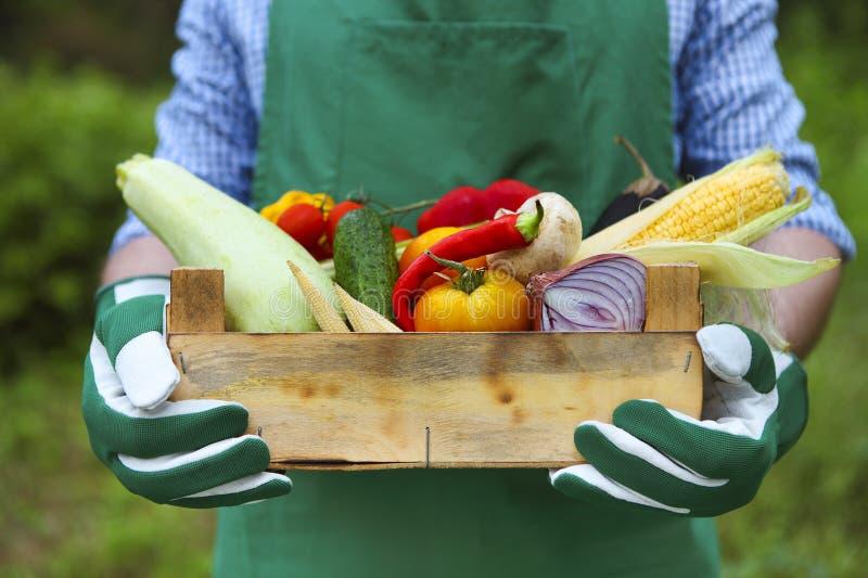 Bondemannen som rymmer träasken, fyllde nya grönsaker royaltyfri foto