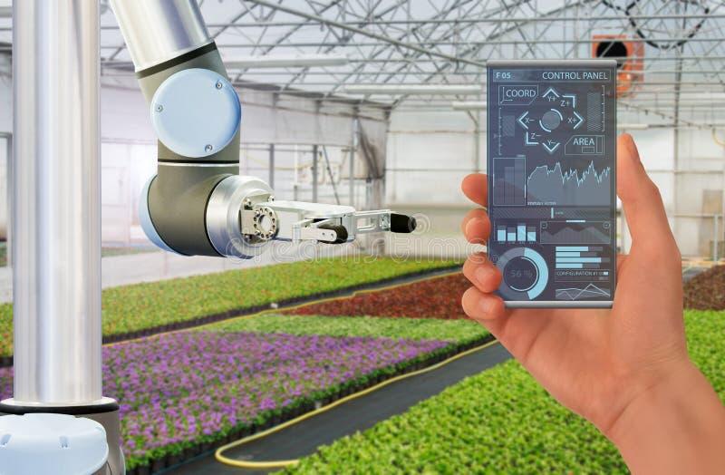 Bonden kontrollerar roboten i ett modernt växthus fotografering för bildbyråer