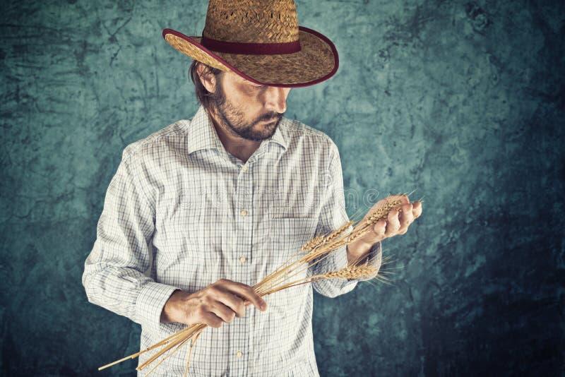 Bonden med hållande vete för cowboysugrörhatt gå i ax royaltyfri foto