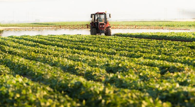 Bonden på en traktor med en sprejare gör gödningsmedel för ung grönsak royaltyfria bilder