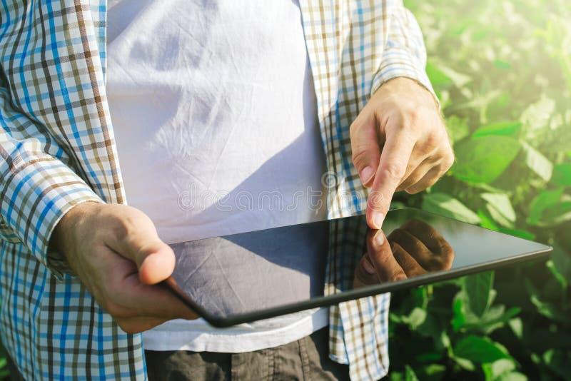 Bonden som använder den digitala minnestavladatoren i kultiverad sojaböna, kantjusterar royaltyfri fotografi