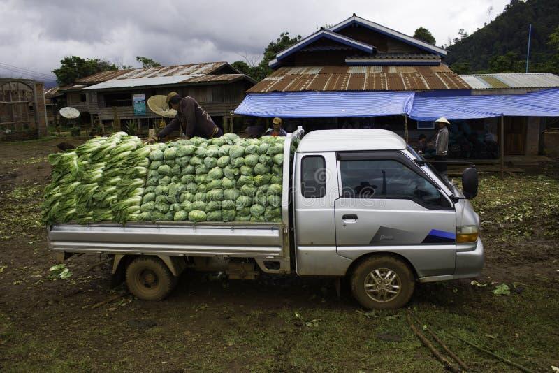 Bondeplockningen av grönsaker äger rum varje vecka av året arkivfoton