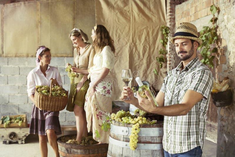Bondesmak per exponeringsglas av vitt vin Plockningtid royaltyfria foton