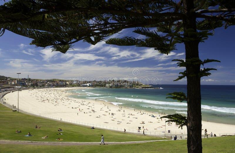 Bondi Strand - Sydney - Australien stockfoto