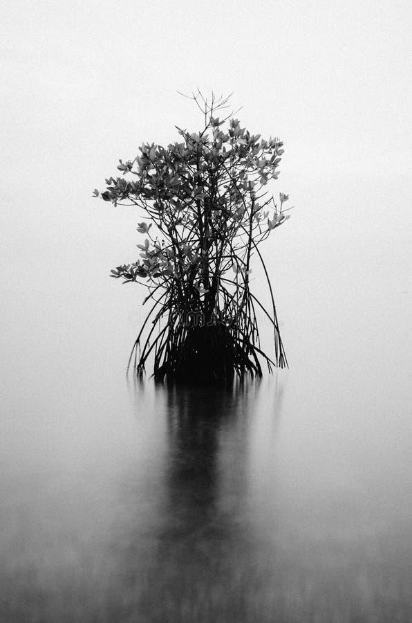 Bondo海滩Jepara印度尼西亚 免版税库存图片