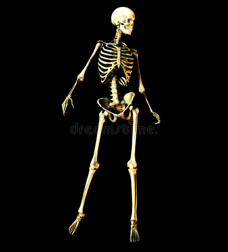 Download Bone 15 stock illustration. Image of ghostlike, frighten - 638014
