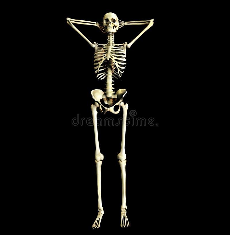 Bone 22 Royalty Free Stock Photo