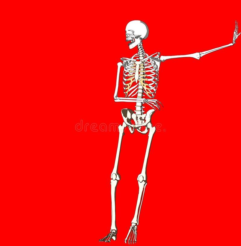 Bone 234