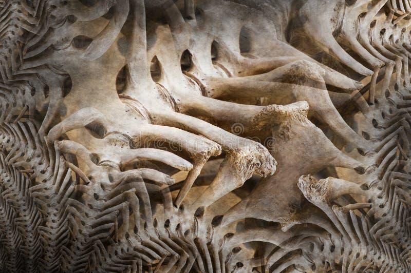 Download Bone dinosaur stock image. Image of fractal, dinosaur - 21123059