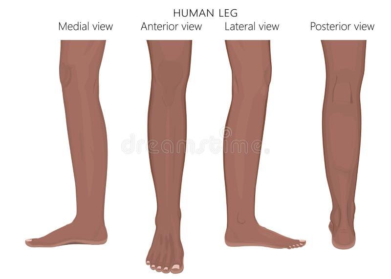 Bone Fractureleg Anatomy African Arabic Indian Stock Vector