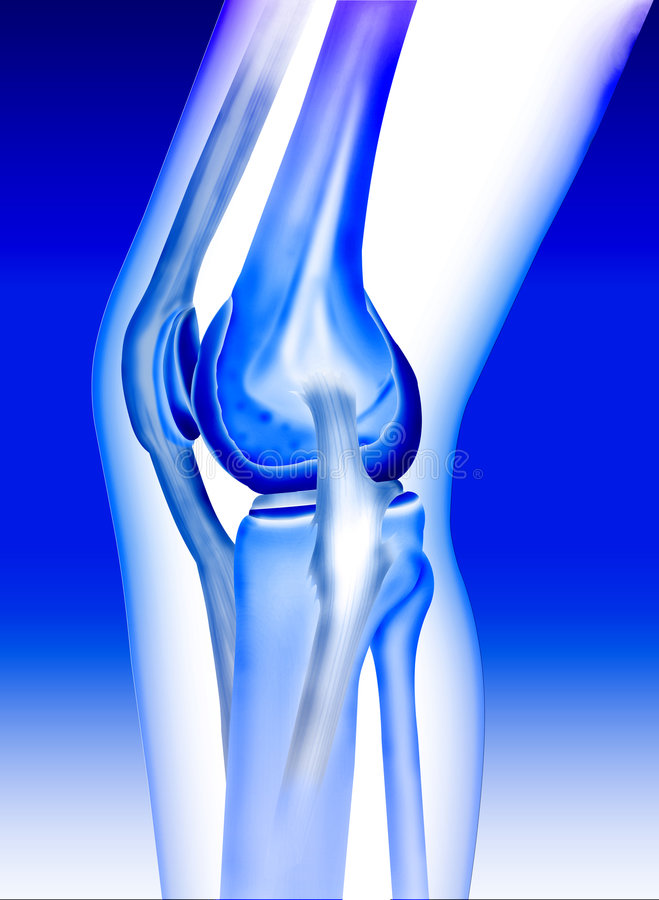 Bone knee. Joint of men created by computer illustration in blue color background stock illustration