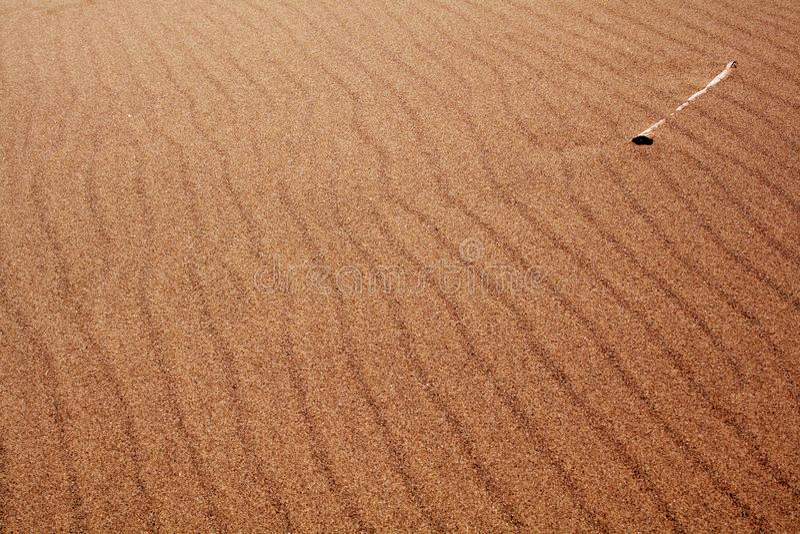 Bone In The Sand Free Stock Photo