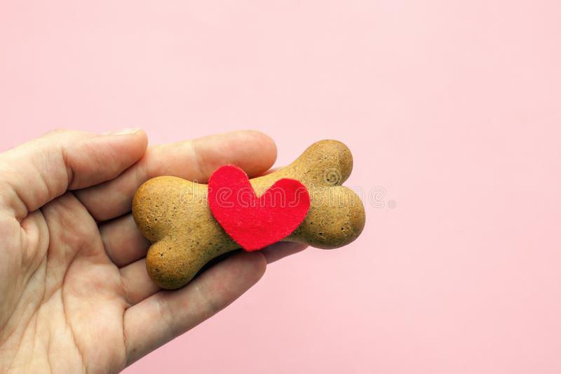 Bone-shaped biscuit for dog and red heart in woman hand on pink background, concept pet care. royalty free stock photos
