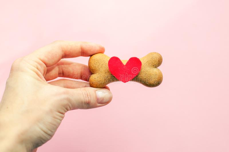 Bone-shaped biscuit for dog and red heart in woman hand on pink background, concept pet care. stock photography