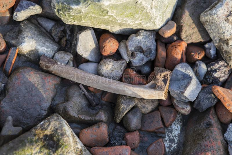 Bone on the Shore of the River Thames in London. A bone among the stones of the shore of the River Thames in London, UK. Seeing bones on the shore of the Thames stock photo