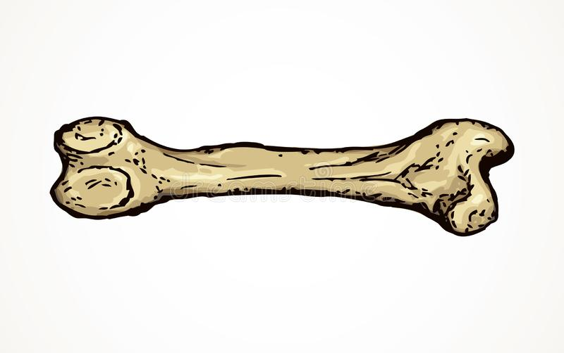 Bone. Vector drawing. Aged large man arm limb part bony object. Close up historic healthy retro big museum artifact. Freehand line black ink drawn logo emblem in vector illustration