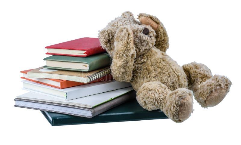 Boneca bonito do urso marrom com muitos livros isolados no fundo branco imagem de stock