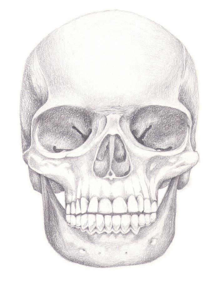 bones череп стоковые изображения