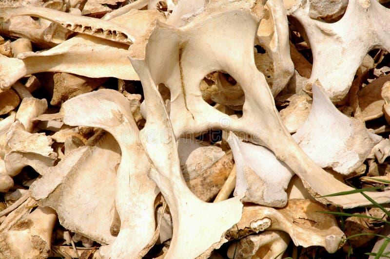 Bones Stock Photos