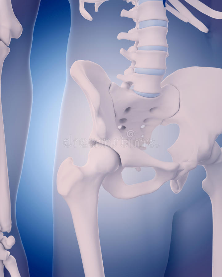 Bones Of The Hip Stock Illustration Illustration Of Sacral 58830872