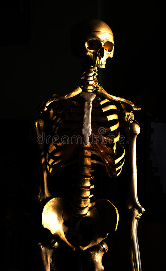 Bones royalty free stock photo