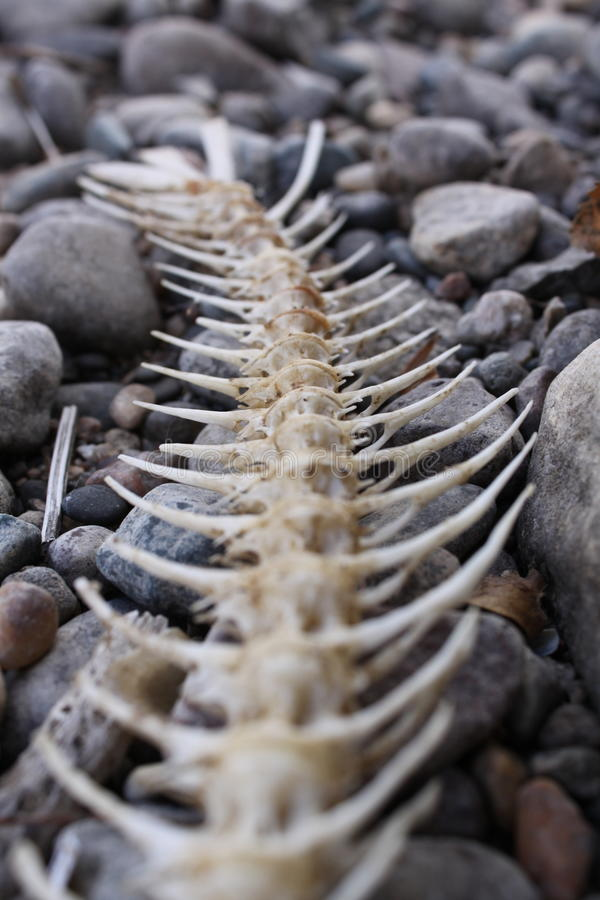 Bones royalty free stock images