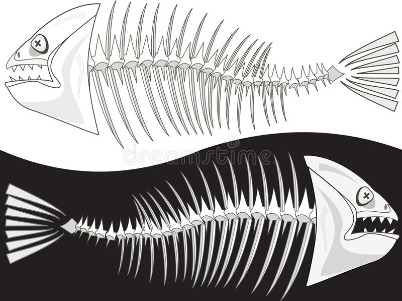 Download Bones Of A Skeleton Of Fish Stock Illustration - Illustration of prickly, picked: 19895648
